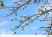 梅花 & 梅花湖:DSC_2275.jpg
