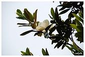 花卉隨手拍:DSC_5408.jpg