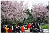 櫻子天元宮賞櫻:DSC_3194.jpg