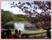 2013陽明山花季:P1050159.jpg
