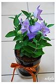 花卉隨手拍:DSC_5433-1.jpg