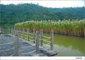 梅花 & 梅花湖:DSC_2476.jpg