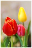 花卉來迎春:DSC_1069.jpg