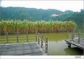 梅花 & 梅花湖:DSC_2477.jpg