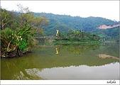 梅花 & 梅花湖:DSC_2481.jpg