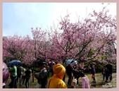 2013陽明山花季:P1050165.jpg