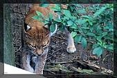 木柵動物園一遊:DSC_2789.jpg