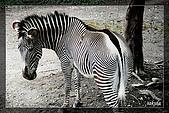 木柵動物園一遊:DSC_2790.jpg