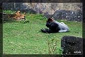 木柵動物園一遊:DSC_2802.jpg
