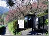 2008 陽明山花季 (1):DSC_0827.jpg