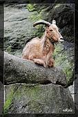 木柵動物園一遊:DSC_2804.jpg