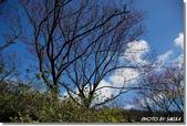 2008 陽明山花季 (1):DSC_0829.jpg