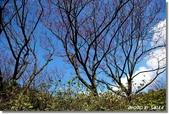 2008 陽明山花季 (1):DSC_0830.jpg