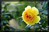大安花卉展:D 021.jpg