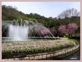 2013陽明山花季:P1050185.jpg
