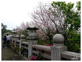 吉野櫻花季:T 017.jpg