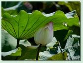 2012台北植物園即景:02.jpg