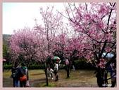 2013陽明山花季:P1050186.jpg
