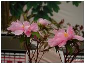 杉林溪牡丹園:_1110185.jpg