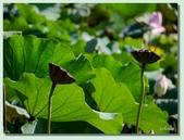 2012台北植物園即景:03.jpg