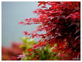 2013 竹仔湖海芋季:P1050678.jpg