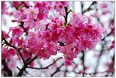 2009陽明山花季:DSC_3138.jpg