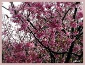 2013陽明山花季:P1050187.jpg
