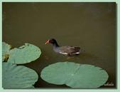 2012台北植物園即景:04.jpg