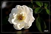 大安花卉展:D 034.jpg