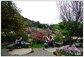 2009陽明山花季:DSC_3145.jpg