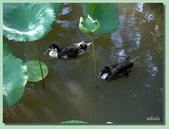 2012台北植物園即景:05.jpg