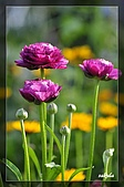 大安花卉展:D 040.jpg
