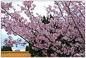 2009陽明山花季:DSC_3153.jpg