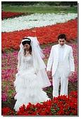 花海裏的新娘:DSC_3099.jpg