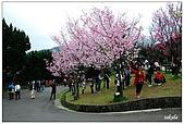 2009陽明山花季:DSC_3159.jpg