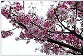 2009陽明山花季:DSC_3161.jpg