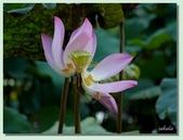 2012台北植物園即景:07.jpg