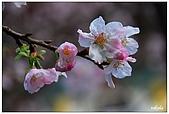 2009陽明山花季:DSC_3205.jpg