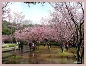 2013陽明山花季:P1050198.jpg