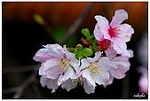 2009陽明山花季:DSC_3227.jpg