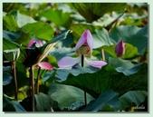2012台北植物園即景:08.jpg