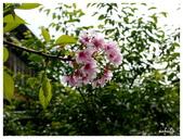 吉野櫻花季:T 045.jpg