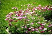 菊展掠影:18.jpg