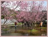 2013陽明山花季:P1050200.jpg