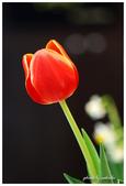 花卉來迎春:DSC_1071.jpg