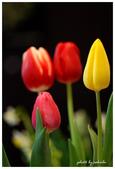 花卉來迎春:DSC_1073.jpg