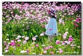 波斯菊的夢想世界:24.jpg