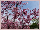 2013陽明山花季:P1050204.jpg