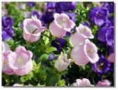 2011台北花卉展.幸福青鳥:P1000580.jpg