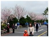 吉野櫻花季:T 053.jpg